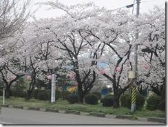 粟島公園2