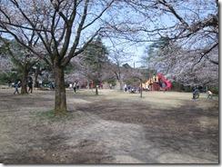 村松公園丘の上桜