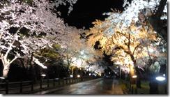 村松公園桜ライトアップ2
