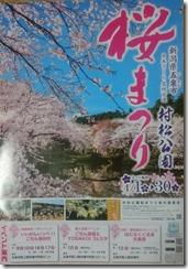 2016桜まつり